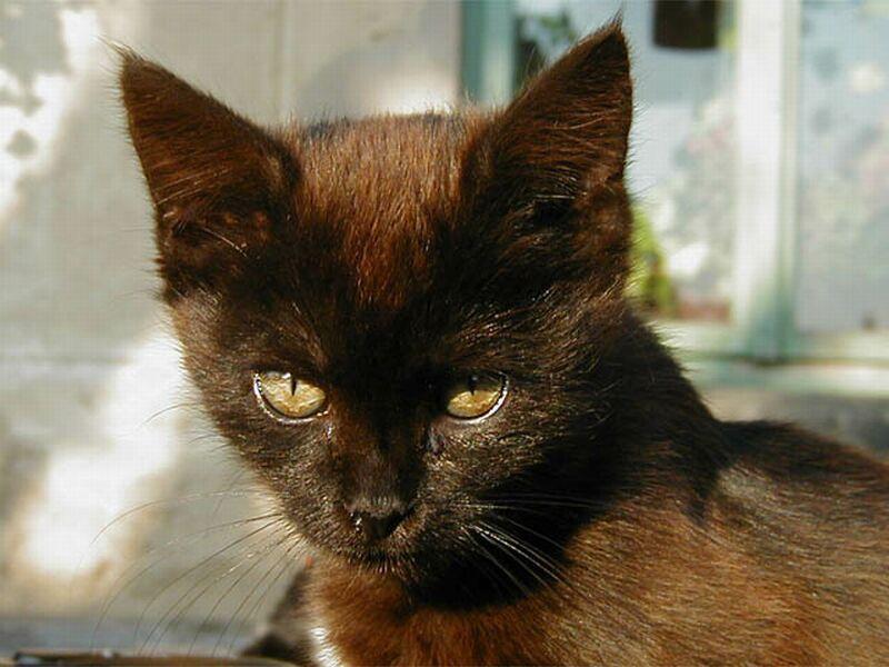 Typická čierna mačka
